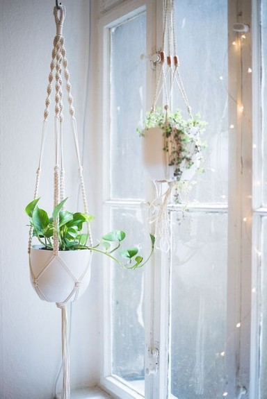 19 DIY Pretty Decorative Plants For Your Fresh Decoration 24
